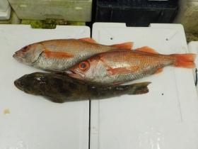 2鮮魚セット2015925