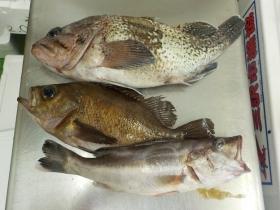 4鮮魚セット2015925