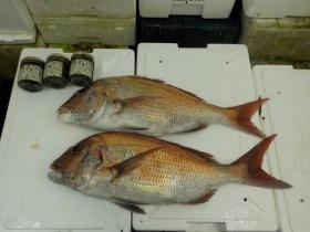 3鮮魚セット2015925