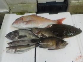 7鮮魚セット2015925