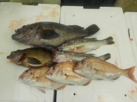 8鮮魚セット2015925