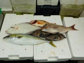 6鮮魚セット2015928