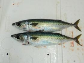 10鮮魚セット2015928