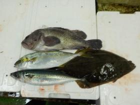 9鮮魚セット2015928