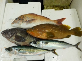 8鮮魚セット2015928