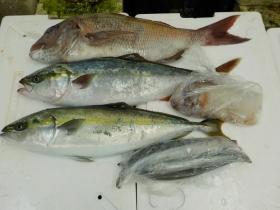 1鮮魚セット2015929