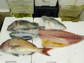 2鮮魚セット2015929