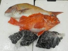 11鮮魚セット2015929