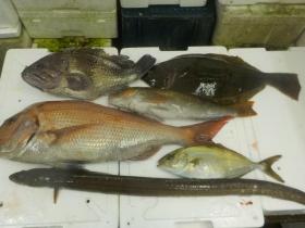 14鮮魚セット2015929