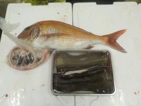 16鮮魚セット2015929
