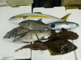 7鮮魚セット20151016