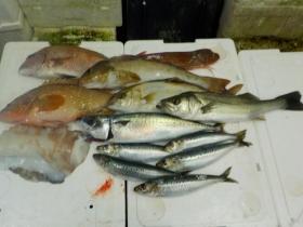 11鮮魚セット20151016