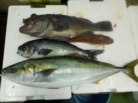 6鮮魚セット20151022