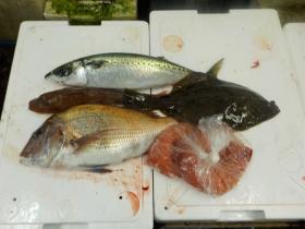8鮮魚セット20151022