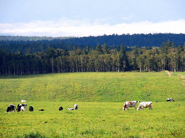 s-模範牧場の牛さん