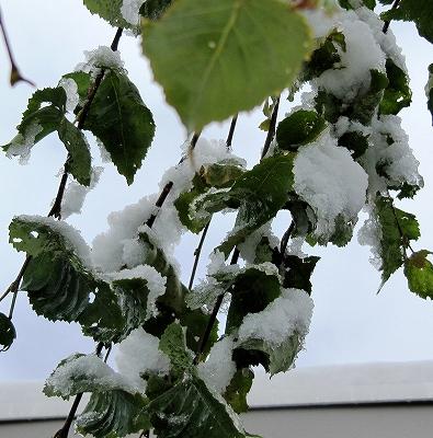 s-落雪にご注意です!