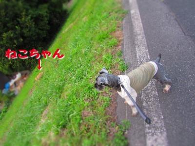 IMG_3984_20151021122202000.jpg