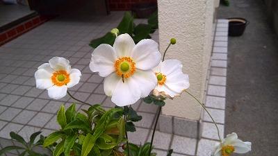IMG_20151005_093437.jpg