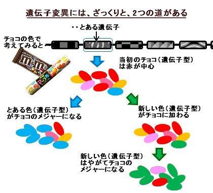ヒト遺伝子変異をチョコの色で考えると