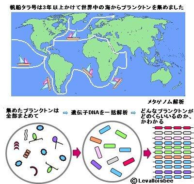 海洋プランクトンをメタゲノム解析