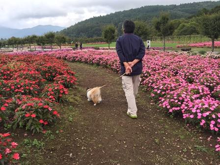 花の都公園1