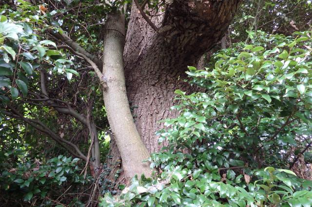 幹は太いが欠損の多い老木のようだ