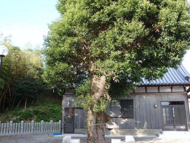 阿波井神社のクスノキ