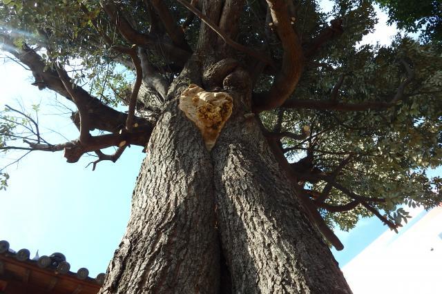 大枝を伐採しすぎ