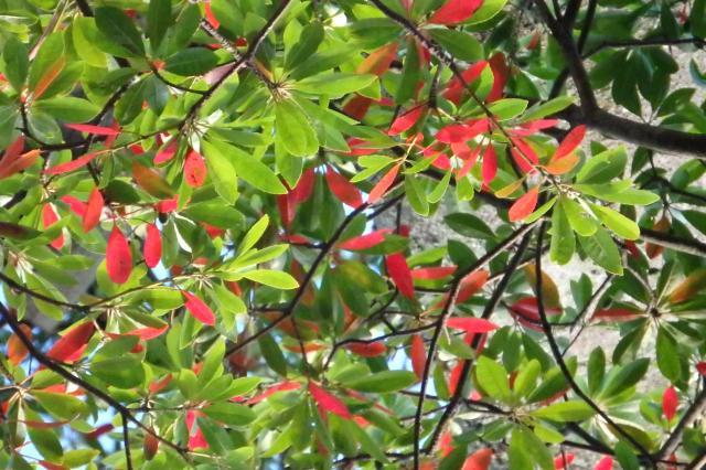 紅葉が多いので枝に虫でも?