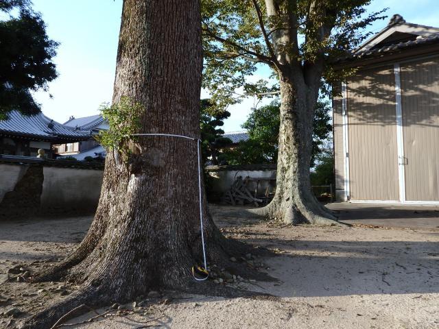 榎列下幡多の八幡神社の大クスノキと大ケヤキ