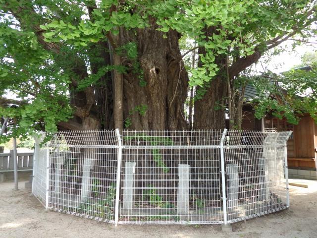 周囲にフェンスを張り厳重に保護する
