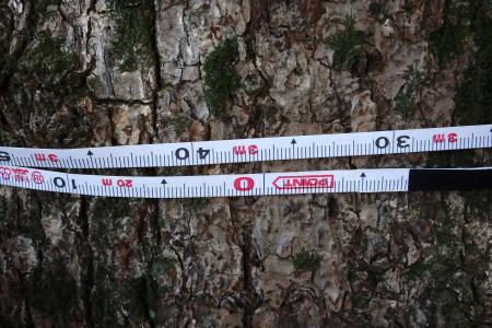 幹周3m36cm