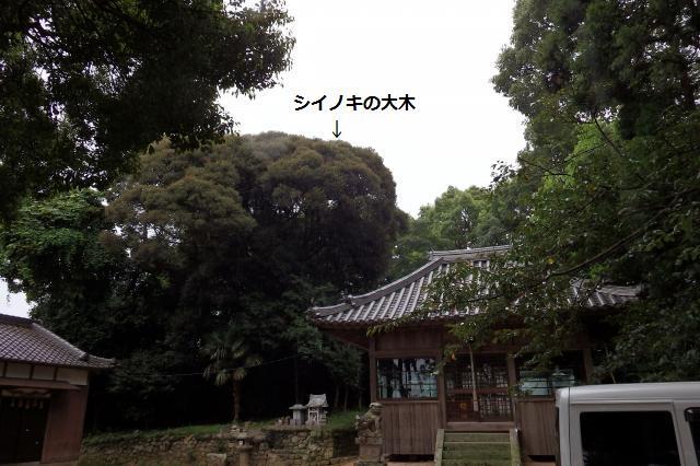 久度神社の社叢