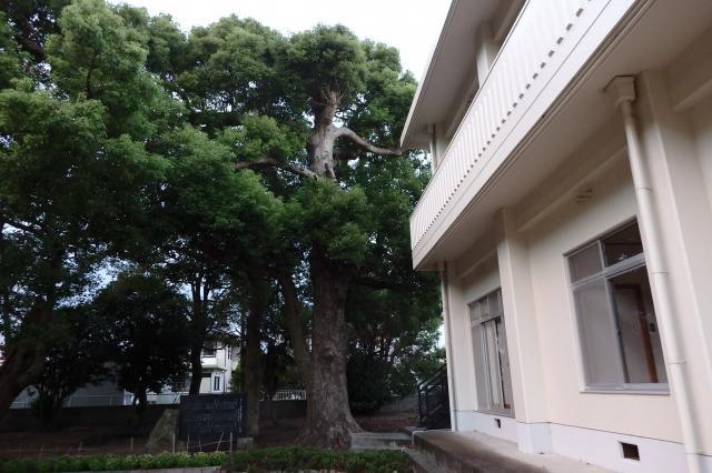 建物に一番近い木