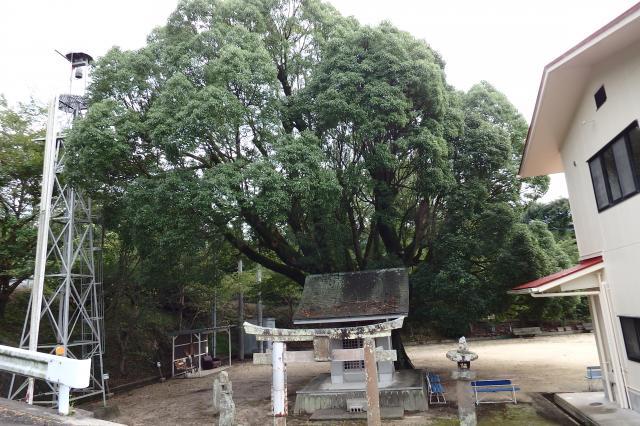 兵庫県最大のクスノキ 楠大明神側から