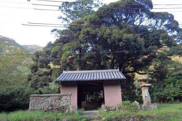 馬回地区入り口のシイノキ巨樹