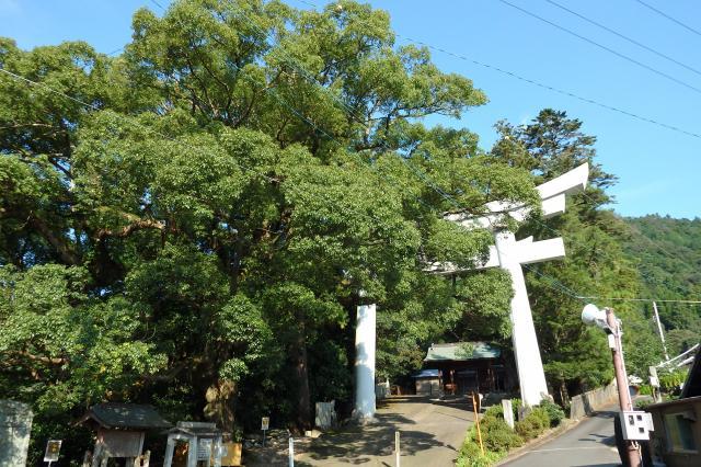 宇佐八幡神社の社叢林