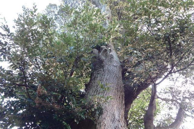 幹や大枝に欠損がある