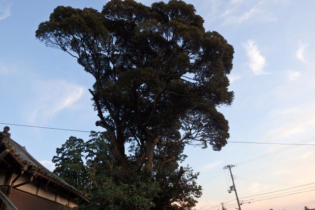 建物側の枝を昨日伐ったそうだ
