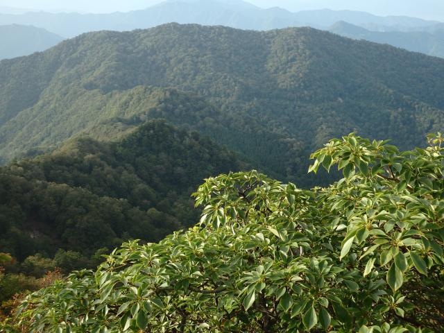 山々はブナの原生林に覆われる