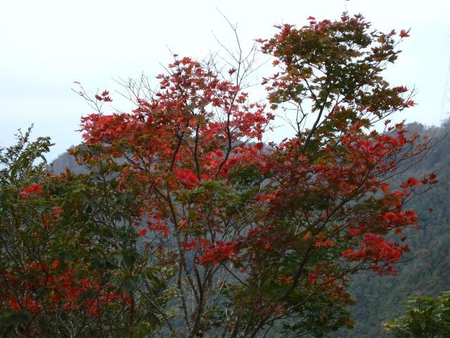 紅葉が始まっている