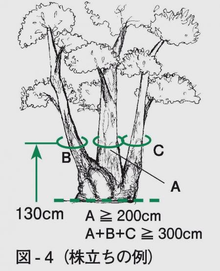 株立ち巨樹の幹周の求め方