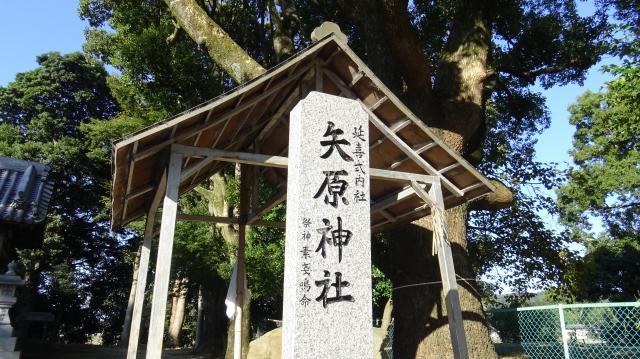 矢原神社のクスノキ