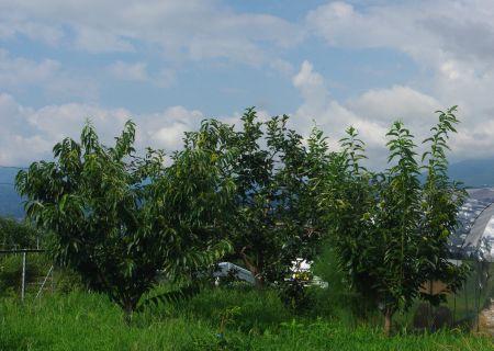 150824-栗と柿