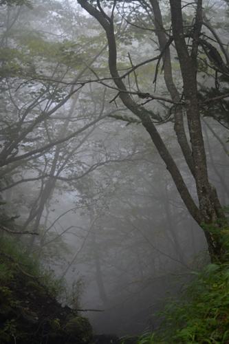 木々との出会い