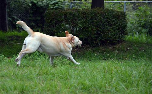 飛ぶように走る犬