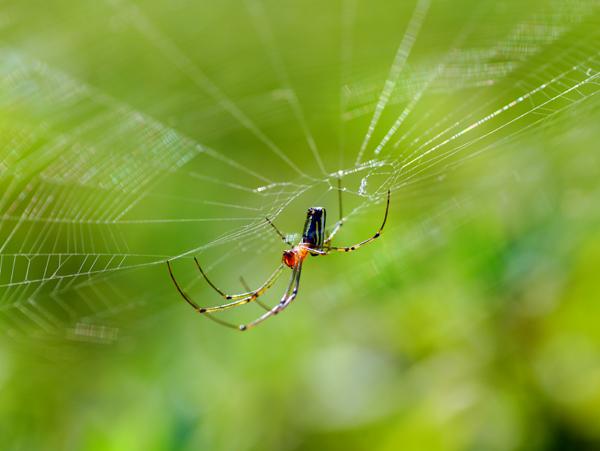 秋の蜘蛛2