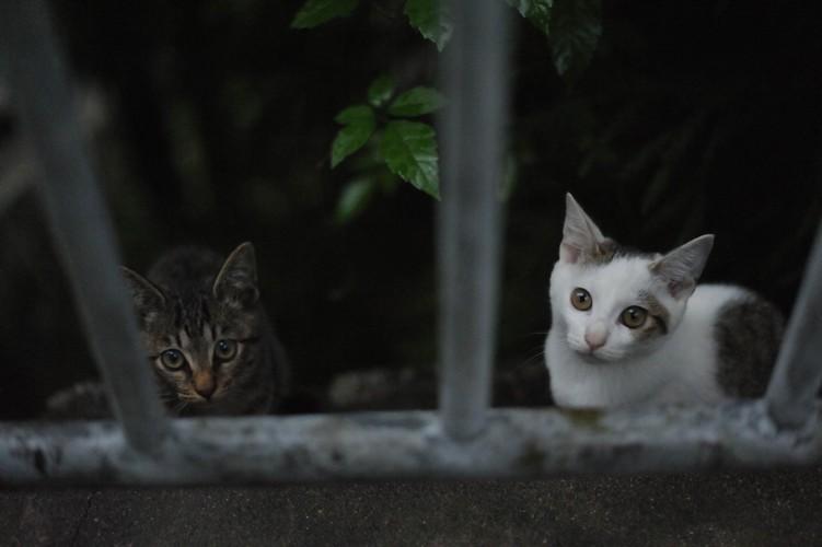 雨の日の仔猫たち