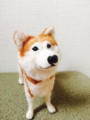 秋田犬りゅう