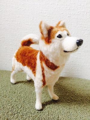 秋田犬りゅう2